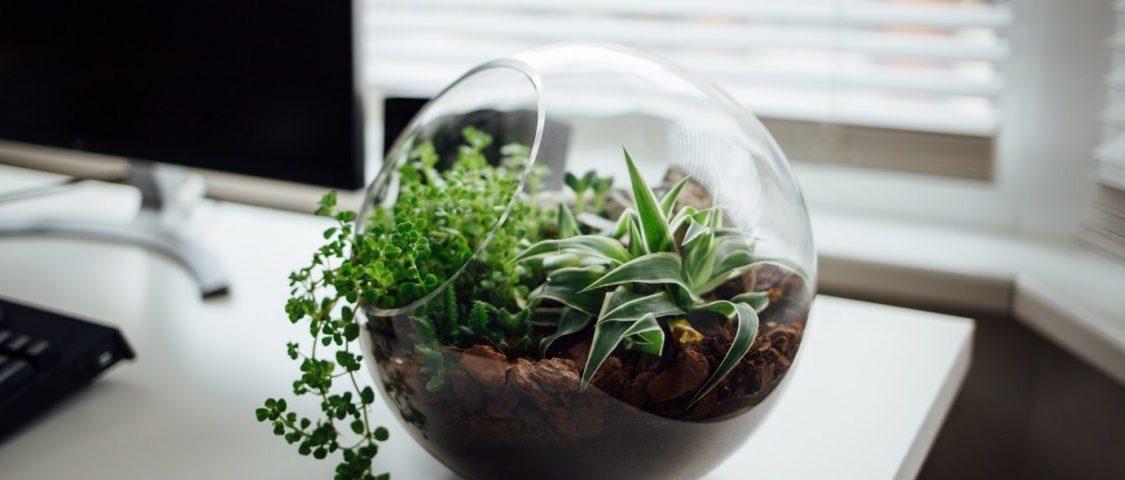 piante-ufficio-1200x480